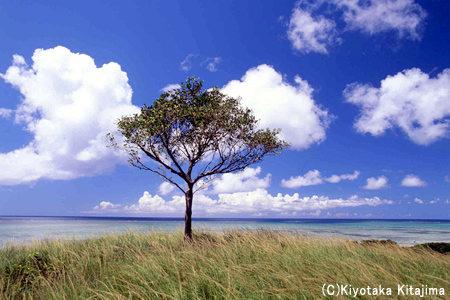 小浜島:海が見える丘