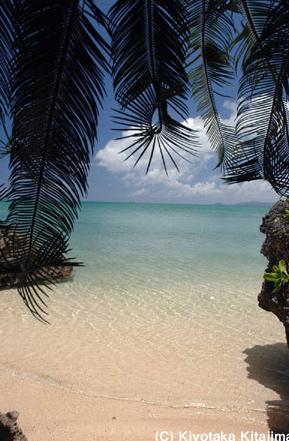ビーチ:Private beach