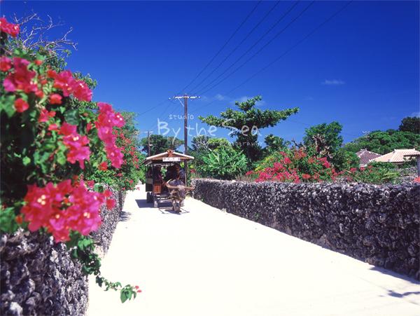 竹富島:水牛車
