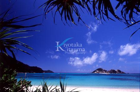 渡嘉敷島:アダンと海