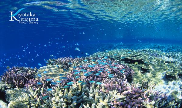 002水中写真:Twinkle fish
