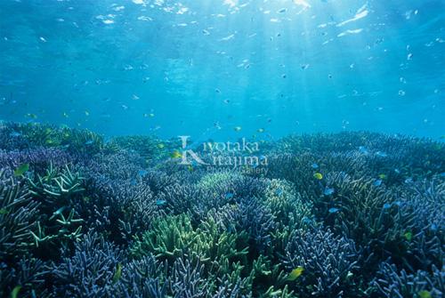 003水中:珊瑚の森